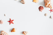 Sea shells on gray background. Summer concept. Flat lay, top view, copy space