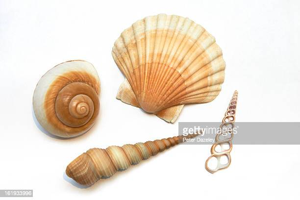 Sea shells on white background