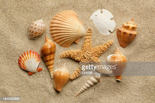 Sea shells slightly buried in beach sand