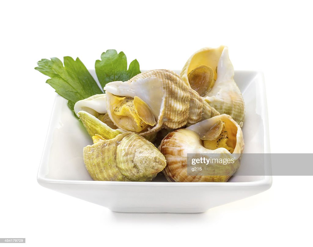Sea shells with herbs : Stock Photo