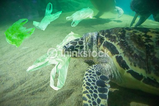 Sea Turtle eat plastic bag ocean pollution concept : Stock Photo