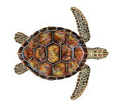 Sea Turtle isolated on white background. 3D render