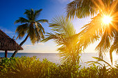 Sea view with sunbeams palms and plants