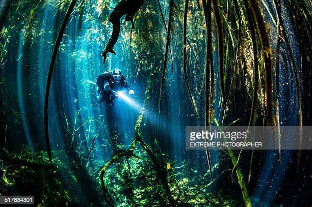 Sea xenotes