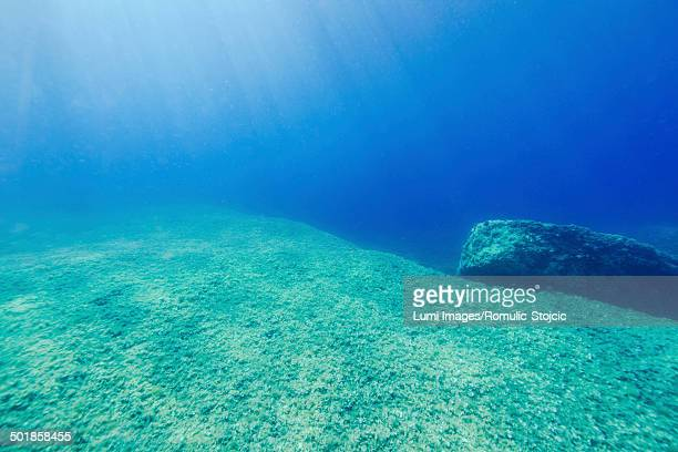 Seabed, Adriatic Sea, Dalmatia, Croatia