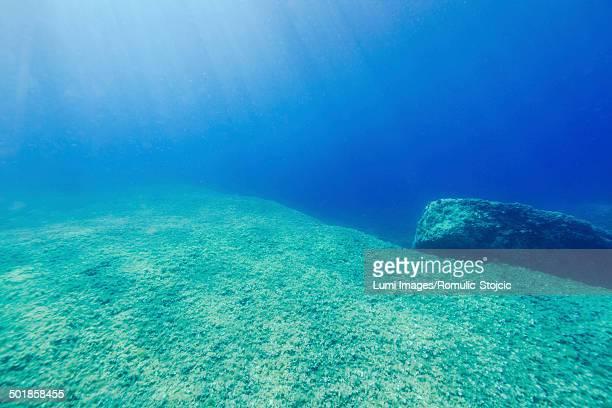 Seabed, Adriatic Sea, Dalmatia, Croatia