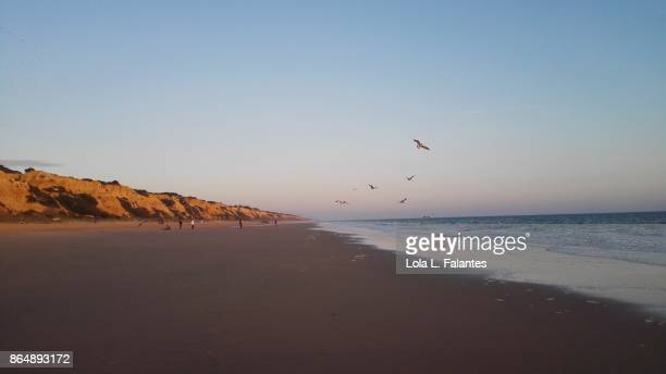 Seabirds in Mazagon beach, Doñana natural park