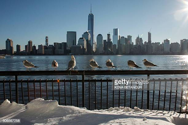 Seabirds rest on the sidewalk at the Hudson River Shore as the New York Skyline it's seen from Exchange Place on January 24 2016 in Jersey City A...