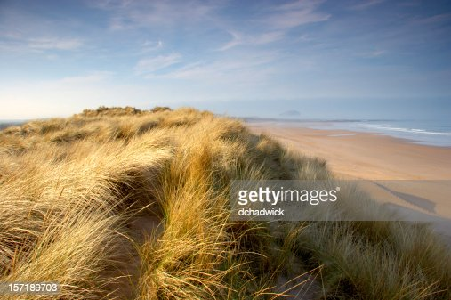 Seabreeze on the sand dunes along the shore