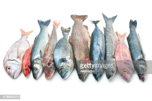 Concours : modalités d'organisation - Page 3 Seafood-isolated-on-white-background-picture-id478665023?s=170667a&w=1007