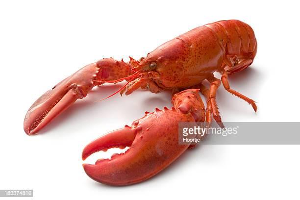 Seafood: Lobster