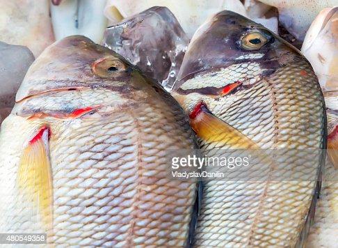 Seafood on ice : Stock Photo