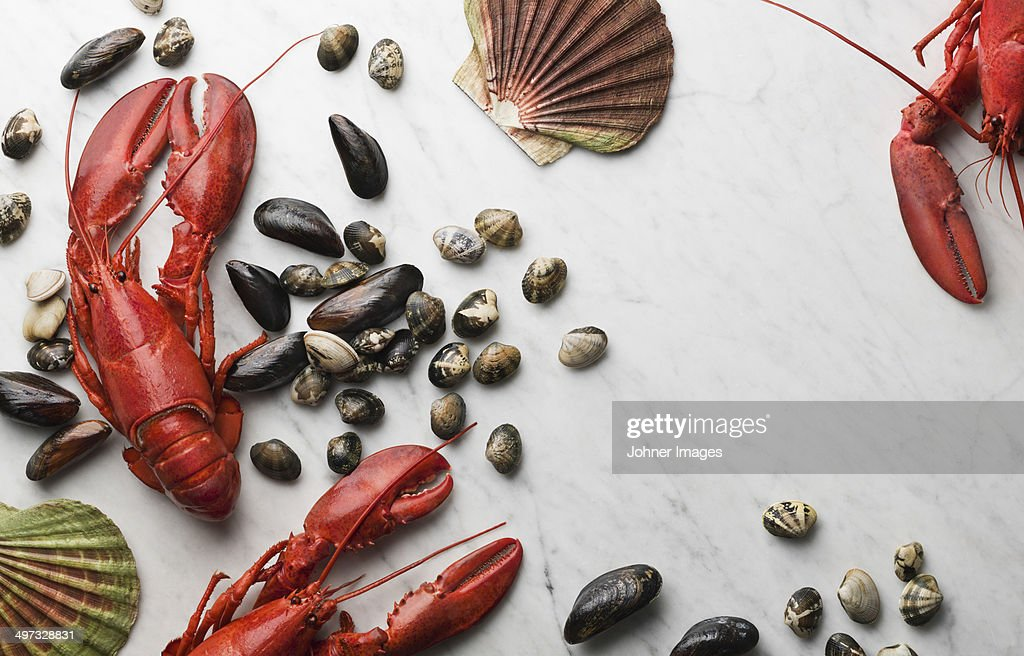 Seafood on white background