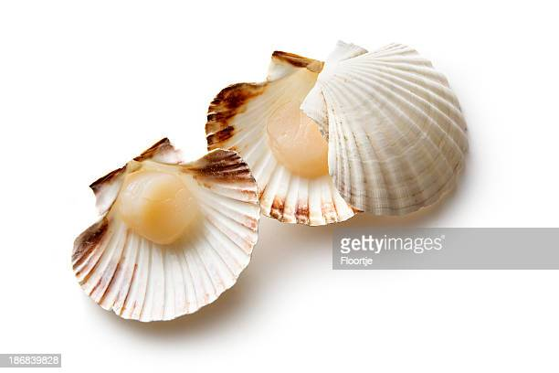 Seafood: Scallops