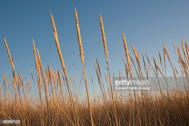 Seagrass against blue sky