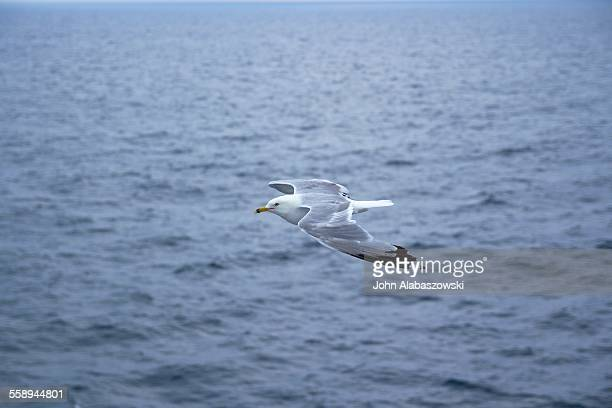 A seagull against a water background