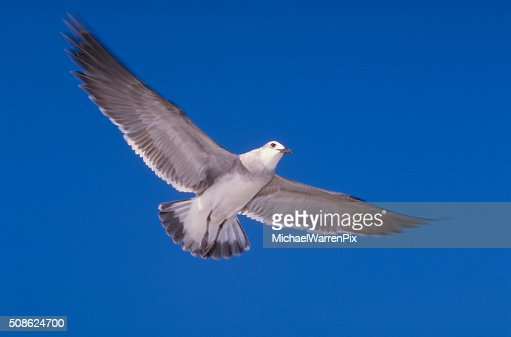 Seagull and Blue Sky : Stock Photo