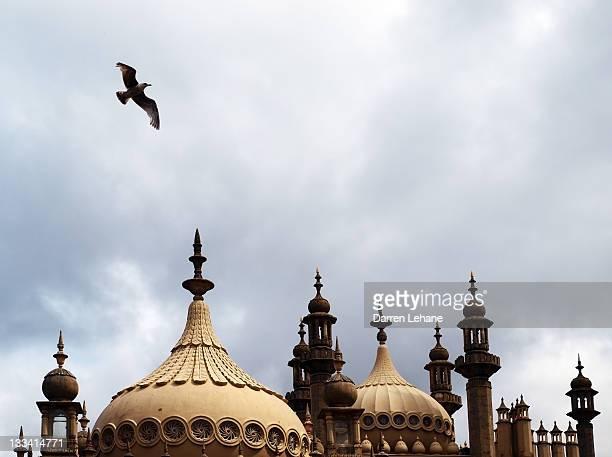 Seagull and Brightonpavillion