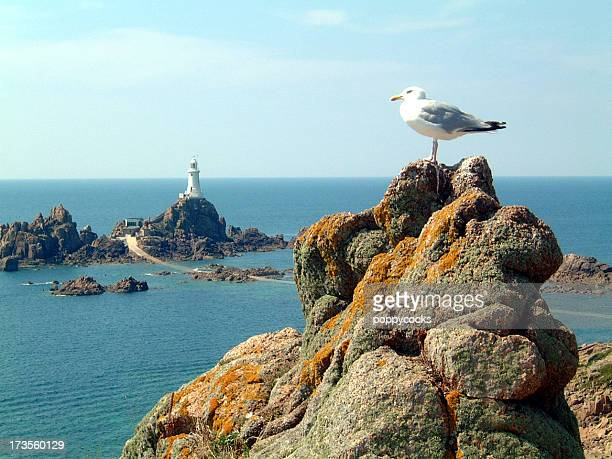 Seagull at Corbiere