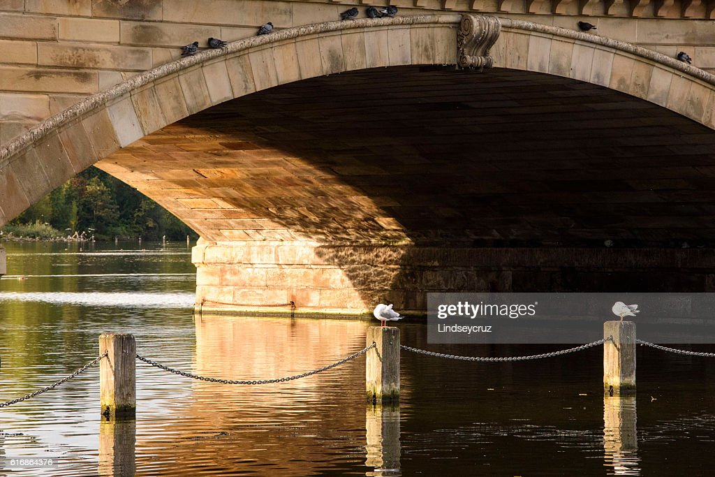 seagull at the bridge : Stock Photo