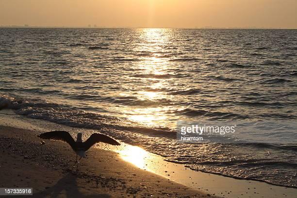 Seagull Beach Sunrise