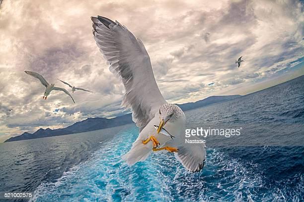 Seagull ジョンフィッシング