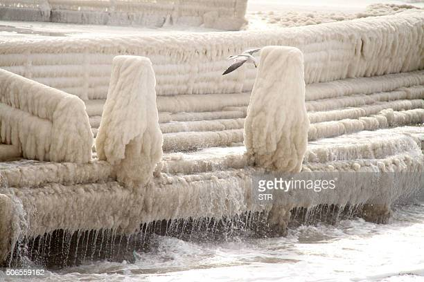 A seagull flies above the icecovered waterfront by the seaside in Penglai in eastern China's Shandong province on January 24 2016 Much of China...