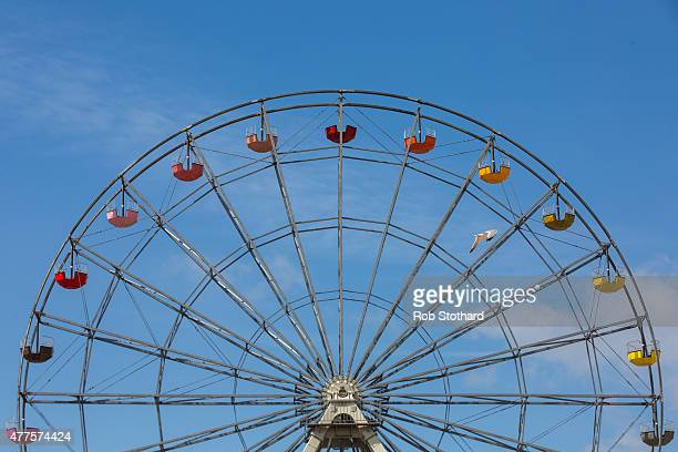 A seagull flies in front of The Big Wheel of Colour at Dreamland amusement park on June 18 2015 in Margate England Dreamland is considered to be the...