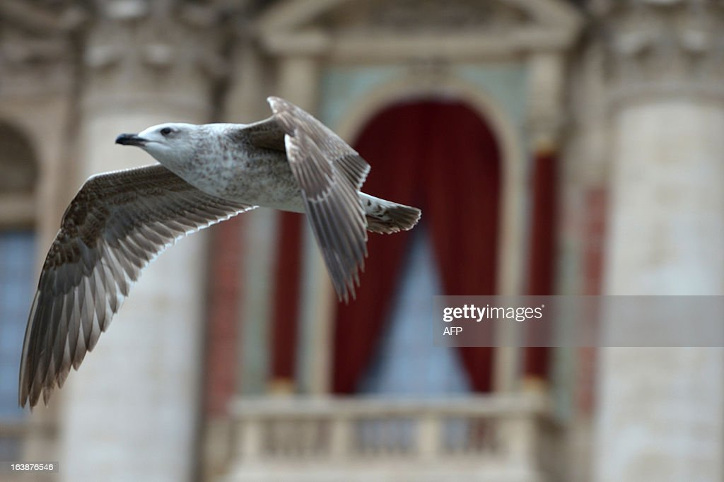 A seagull flies in front of the main balcony of St Peter's basilica during the Angelus prayer on March 17, 2013 at the Vatican. Pope Francis begins his papacy in earnest today ahead of his formal inauguration mass, with a weekly prayer address used by previous pontiffs to comment on international affairs. The pope's first Angelus prayer, delivered from a window high above St Peter's Square, is a chance for the first Latin American pontiff to begin to sketch out a more global vision for the role of the Roman Catholic Church.