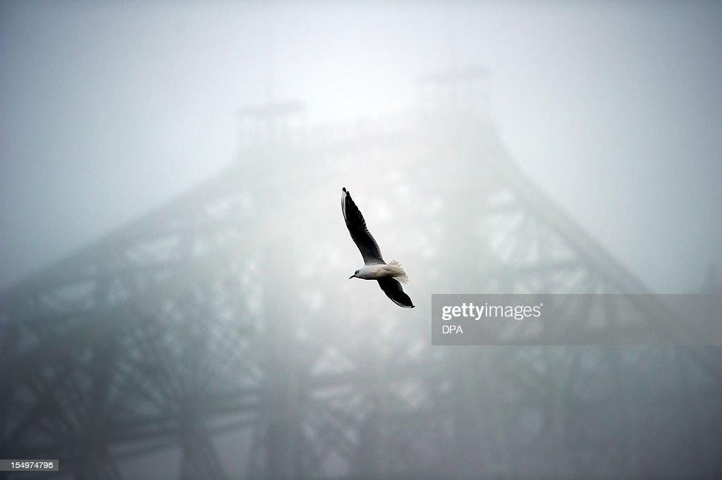 A seagull flies in front the bridge 'Blue Wonder' (Blaues Wunder) hidden by fog in Dresden, eastern Germany, on October 29, 2012. After first snow fall of the season meteorologists forecast raising temperatures up to 9 degrees for eastern Germany in the coming week.