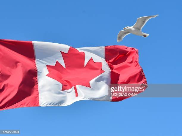 A seagull flies over a Canadian flag at Canada Place in Vancouver on July 2 2015 AFP PHOTO/NICHOLAS KAMM