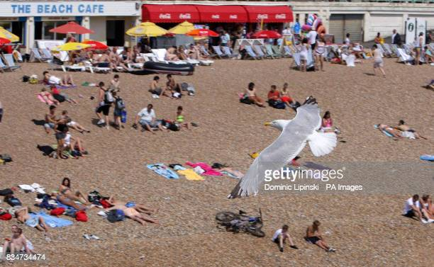 A seagull flies over beachgoers enjoying the hot weather on Brighton seafront