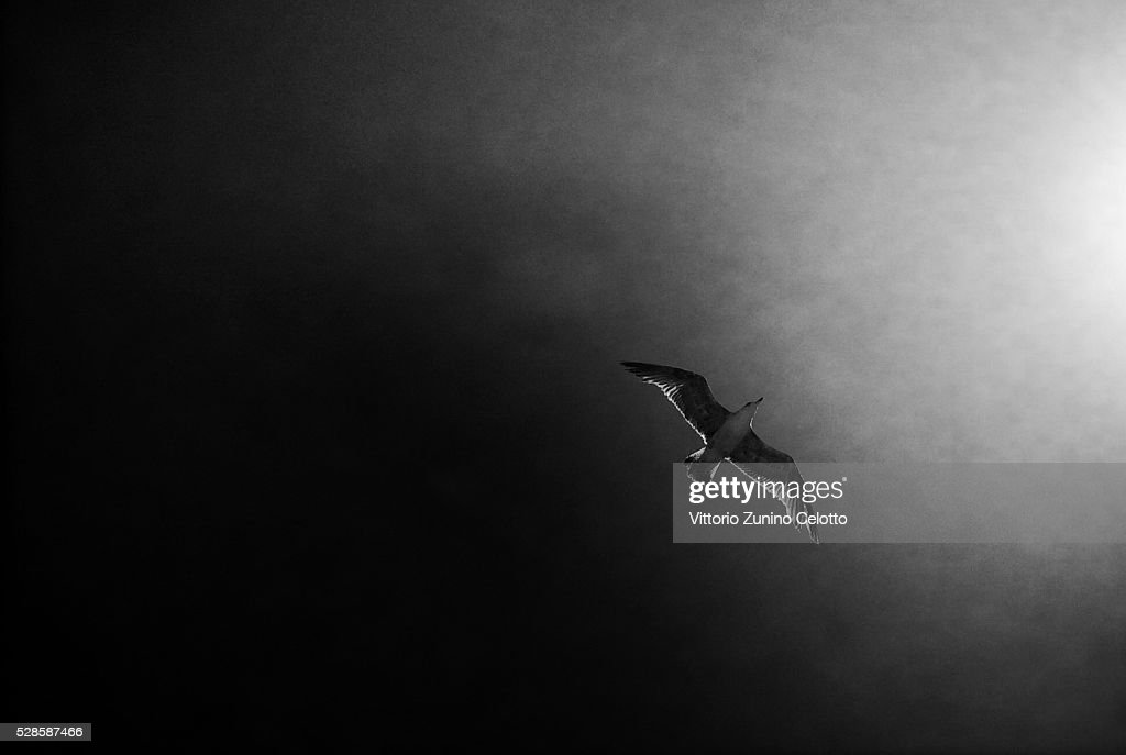 A seagull flies over Playa Mujeres on April 26, 2016 in Lanzarote, Spain.