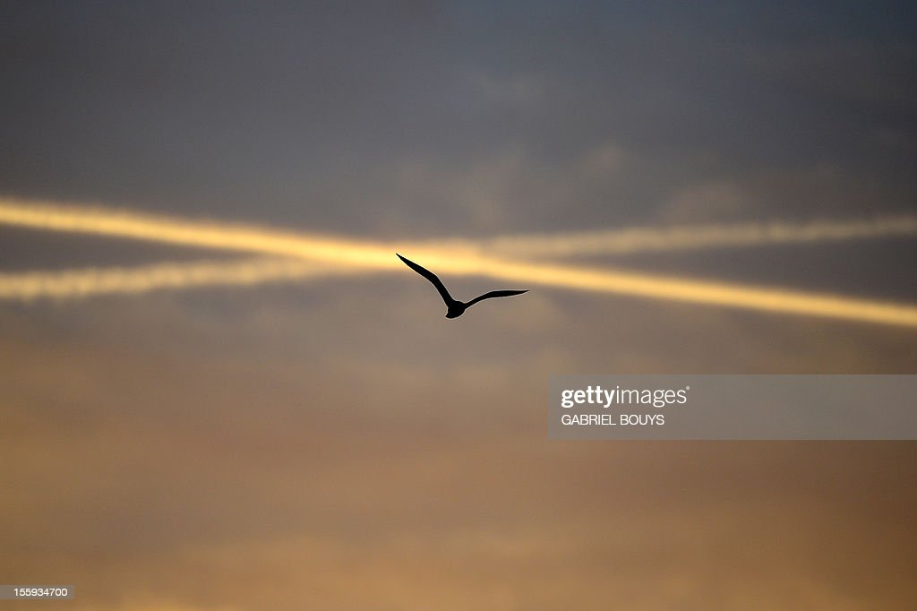 A seagull flies over The Vatican on November 9, 2012.