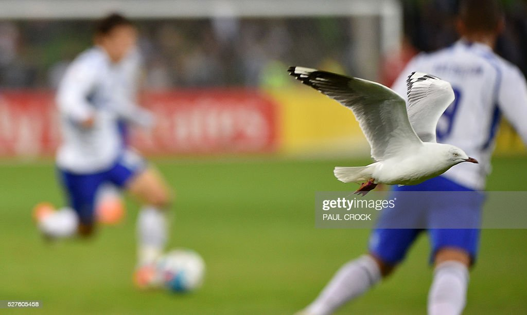 A seagull flies past as Gamba Osaka players take the ball forward during the AFC Champions League football match between the Melbourne Victory and Gamba Osaka in Melbourne on May 3 2016. / AFP / Paul Crock / IMAGE
