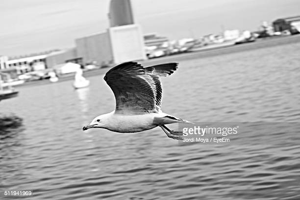 Seagull flying against sea