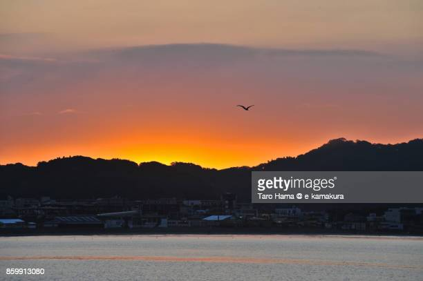 A seagull flying on the morning beach in Kamakura city in Kanagawa prefecture in Japan