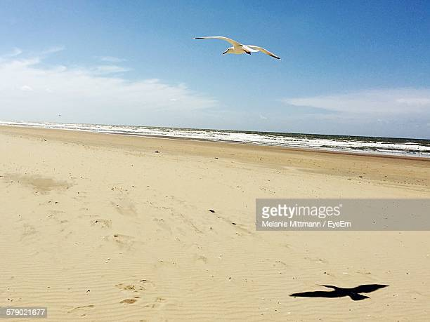 Seagull Flying Over Beach During Sunny Day