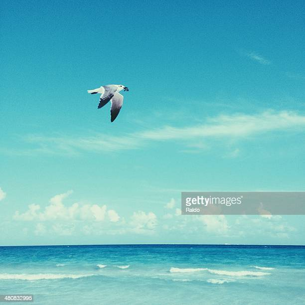 Seagull flying over blue sea