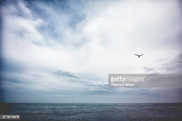 seagull flying over Lake Michigan