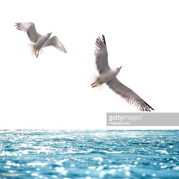 素晴らしい海の上を飛ぶ