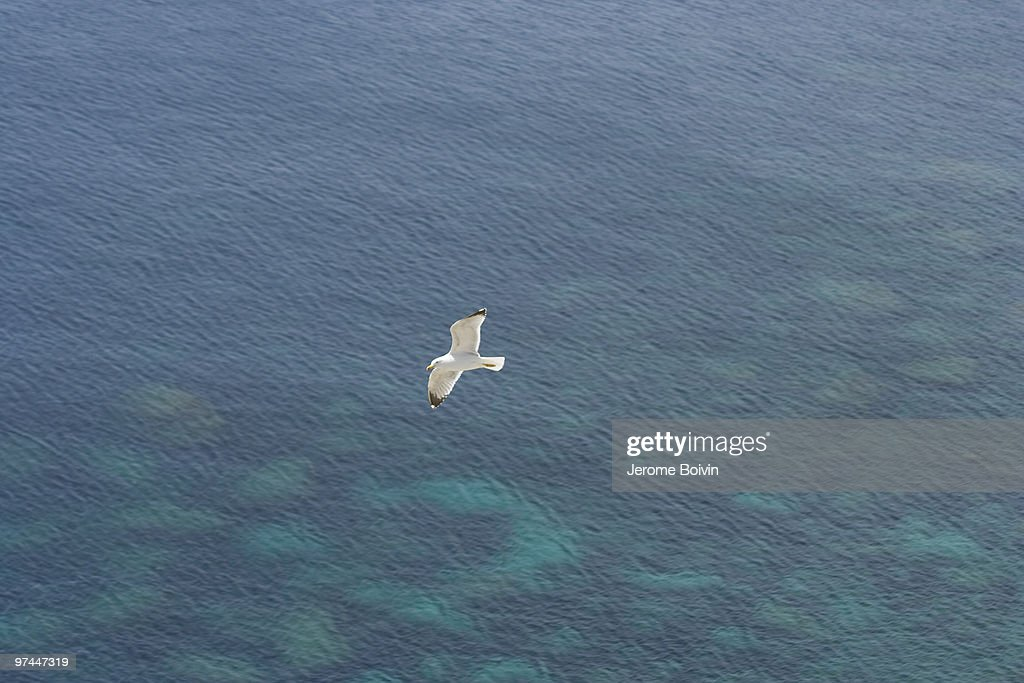 A seagull in Bonifacio : Stock Photo