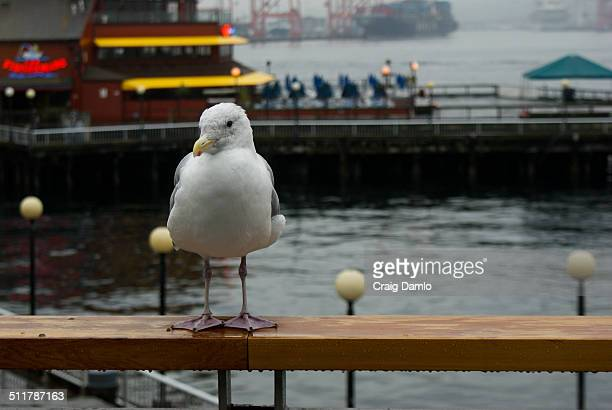 Seagull in rain