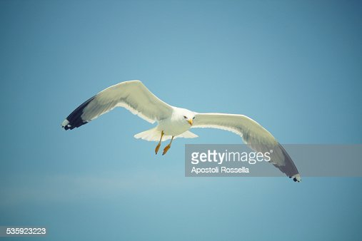 Seagull in the sky : Stock Photo