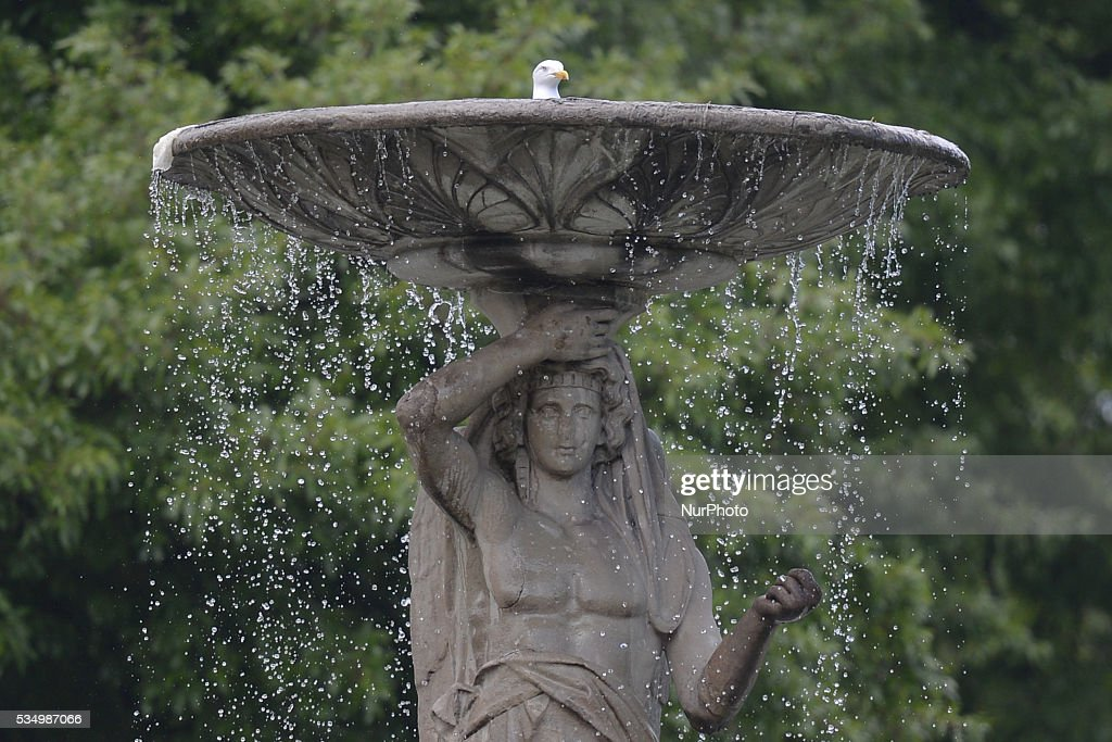 A seagull is enjoying a 'bath' on the top of a statue-fontaine in Dublin's Iveagh Gardens. Dublin, Ireland, on Saturday 28 May 2016.