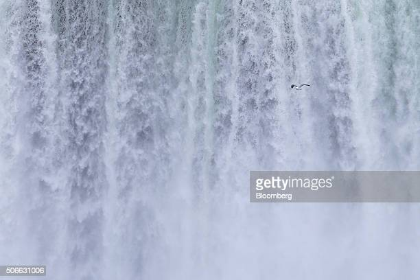 A seagull is seen flying past the Horseshoe Falls in Niagara Falls Ontario Canada on Jan 23 2016 A 34 percent plunge in the Canadian dollar since...