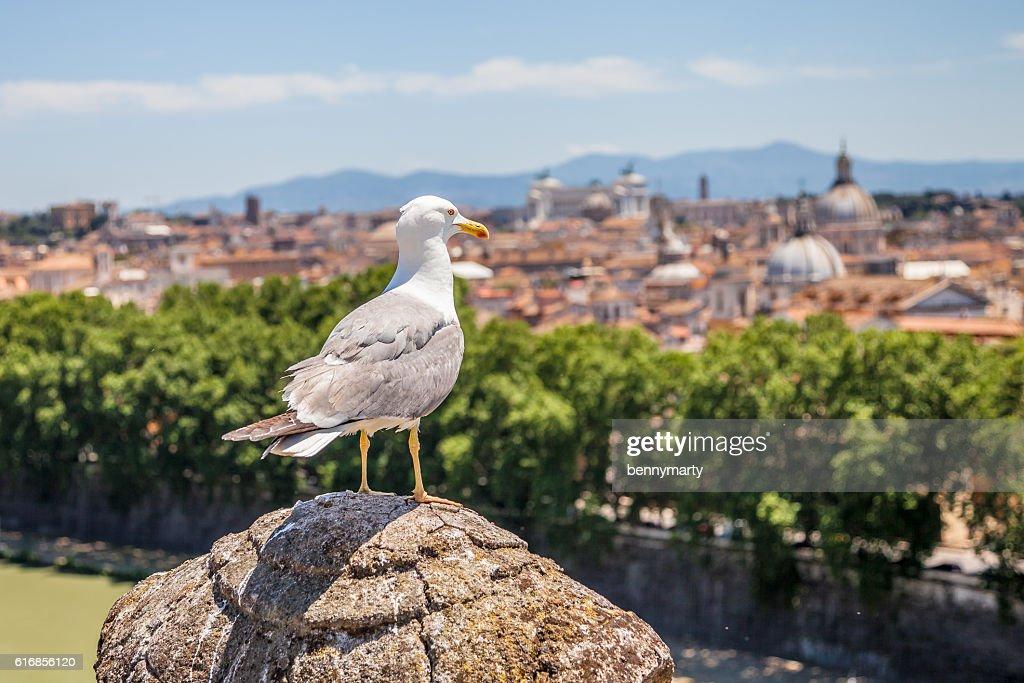 Seagull looking Rome Skyline : Stock Photo