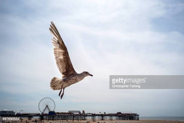 A seagull looks for food on Blackpool beach on June 19 2017 in Blackpool England The UK has officially been put on heatwave alert as the Government...
