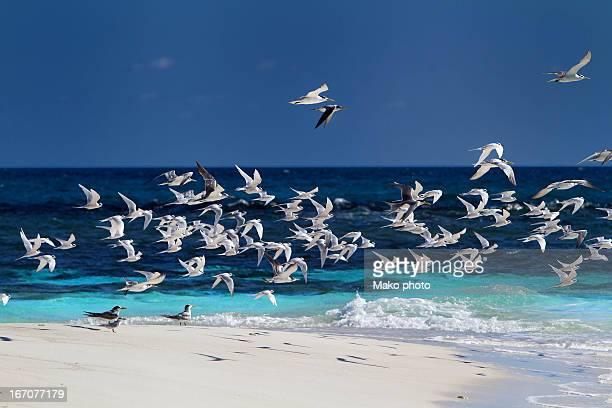 Seagull on flight