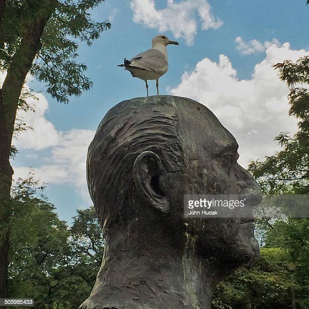 Seagull on the bust of Sir Georg Solti in the Solti Gardens Chicago Illinois